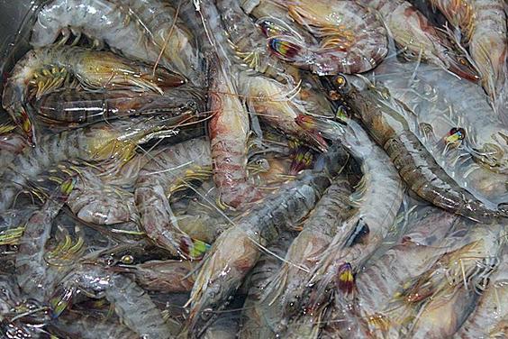 基围虾是什么虾?为什么南方的北方的不一样呢?有什么误会吗?