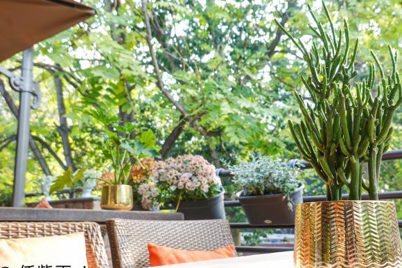 换个方式赏北京秋色,在有阳光的露台上吃泰国菜,生活需要仪式感