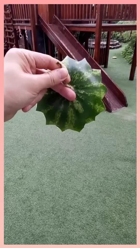 当小哥把西瓜的这一部分反过来,看到另一面,这雕刻得真漂亮