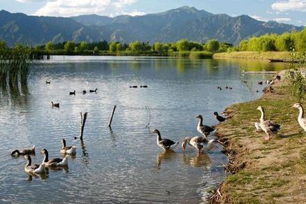 与野鸭的秘密幽会,水天一色的生态园!游客称赞:北京难得一见