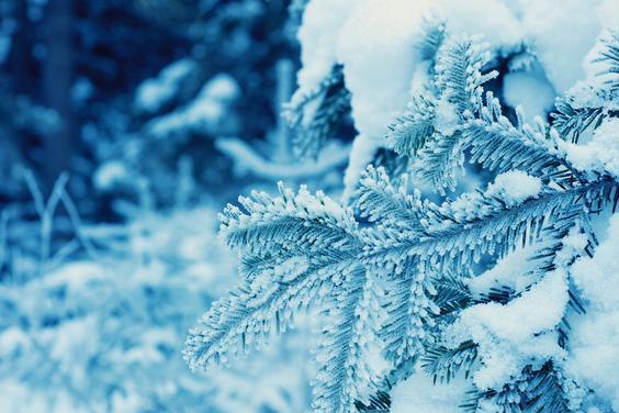 最美的8首冬至诗词,烧一炉炭火,一起来品诗