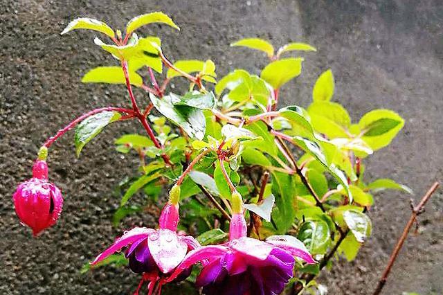 """9种""""漂亮""""的花,盆栽于室内,亲戚上门看见都""""眼红""""!"""