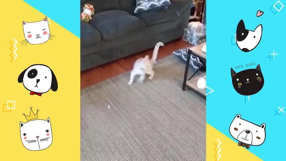 猫咪学会使用坐便拉粑粑,拉完还会冲马桶,真是成精了