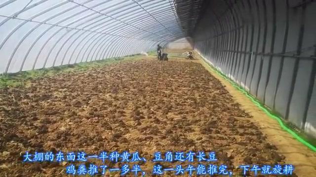 农村胖嫂:栽黄瓜好吃的小秘密,不用化肥,这样做没理由不好吃吧