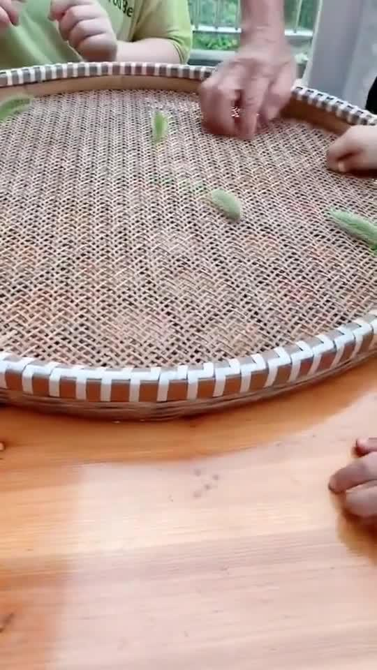 用米筛子玩出新花样,狗尾草秒变虫子,哄孩子的神器!63