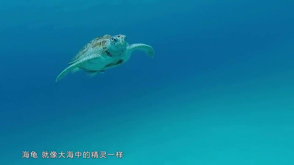据说,潜水遇上海龟会有好运气,任贤齐的好运是什么呢?