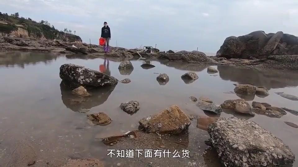 赶海小妹抽干篮球场大小的荒岛深坑,坑底的石斑大鲨鱼抓到手软