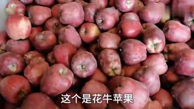 花牛苹果打包发货现场,每个工人都忙不停,果农又是一个大丰收