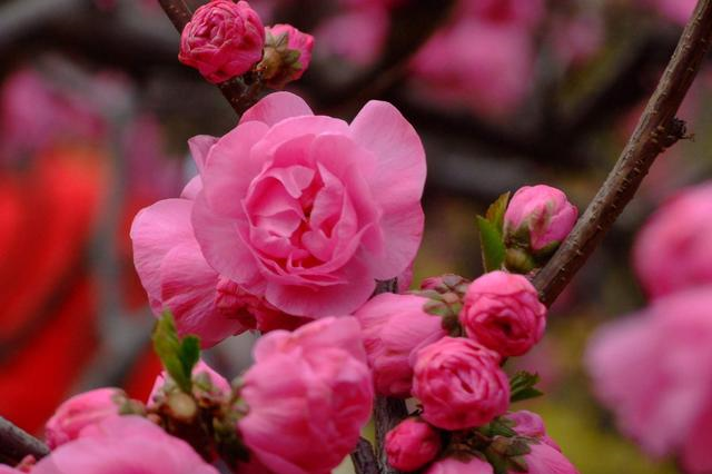 一首经典的咏梅诗,看似在赞美江南的梅花,其实是另有深意