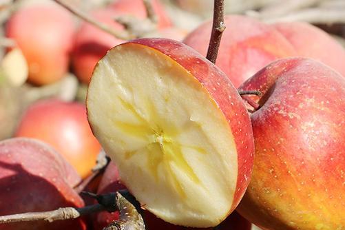 过年买水果6种就够了,自囤送礼两相宜,美味寓意好,家人都喜欢