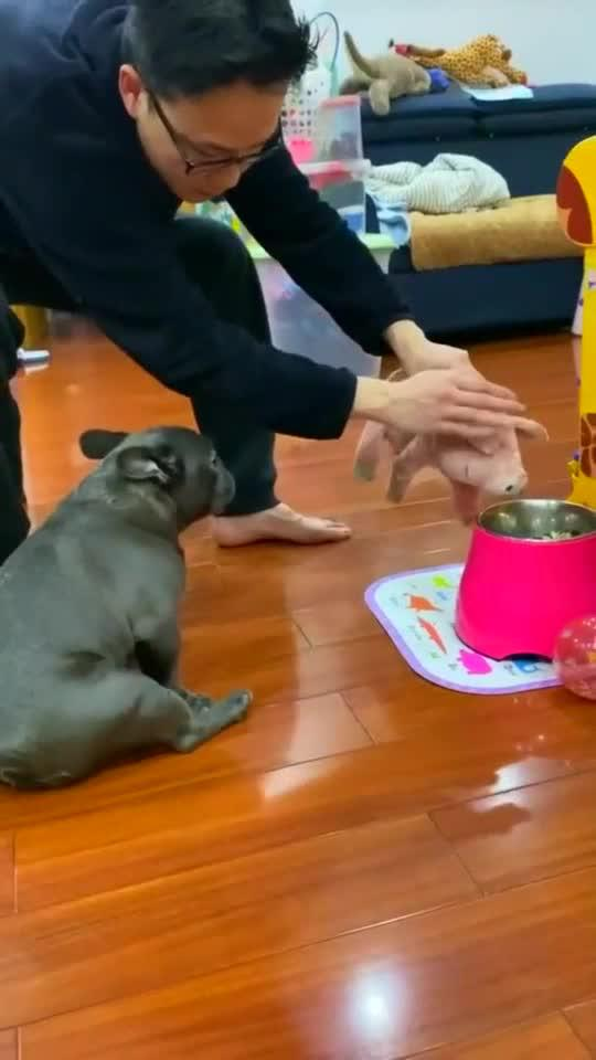 挑食狗的下场,狗子吓得全身肥肉都在抖!