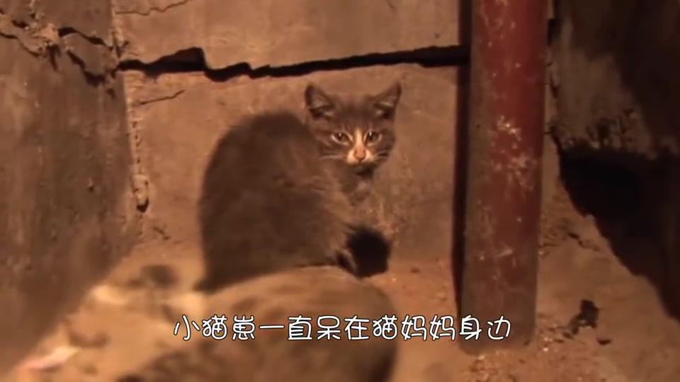 小袋鼠不知妈妈已经死去,使劲往育儿袋里钻,之后它将如何生存?