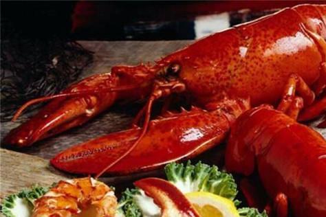"""这只龙虾已经活了一百多年,拿到""""免死金牌"""",吃货们想吃不敢吃"""