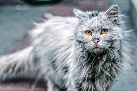 流浪猫的求生欲有多强?猫腿被捕鼠夹夹住,它扯掉皮自救