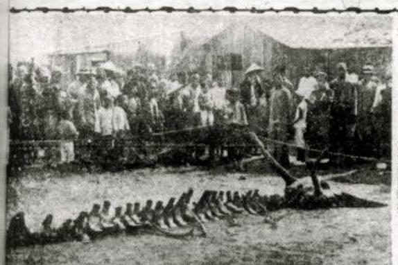 民国时代的营口坠龙是怎么回事?有照片、有目击者,龙存在吗?