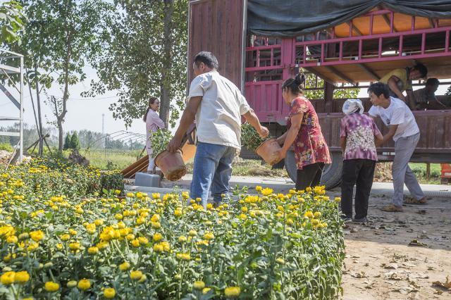 农民种经济作物每亩收入上万,不怕连续阴雨天