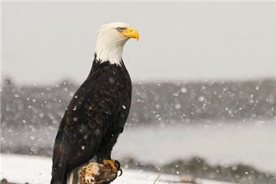 美国的国鸟是鹰,日本的是绿雉,中国的国鸟是啥?却鲜有人知