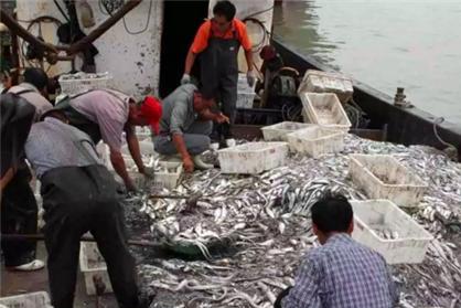 日本渔船捕获一只怪兽,船长嫌脏直接丢了,随后三国派舰船去打捞