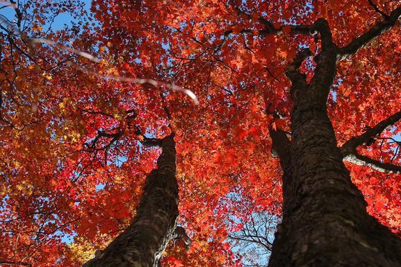 杜牧爬山写了一首诗,28字写出秋天醉美的感觉,后一句成为经典