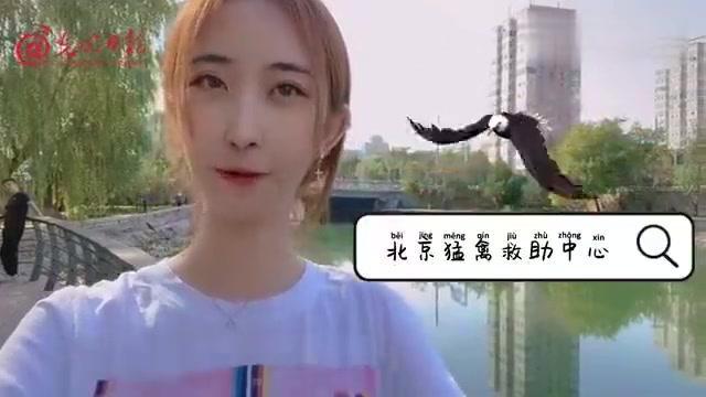 光明生物圈【生物圈vlog:5只康复猛禽放归自然】9月24日