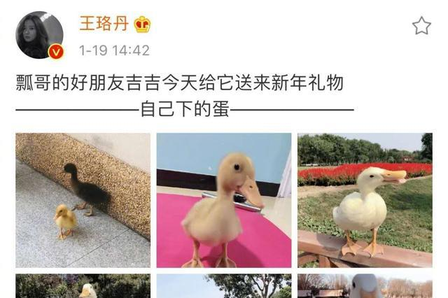 王珞丹深夜上线发布寻鸭启事,感谢方式很特别,网友:凶多吉少