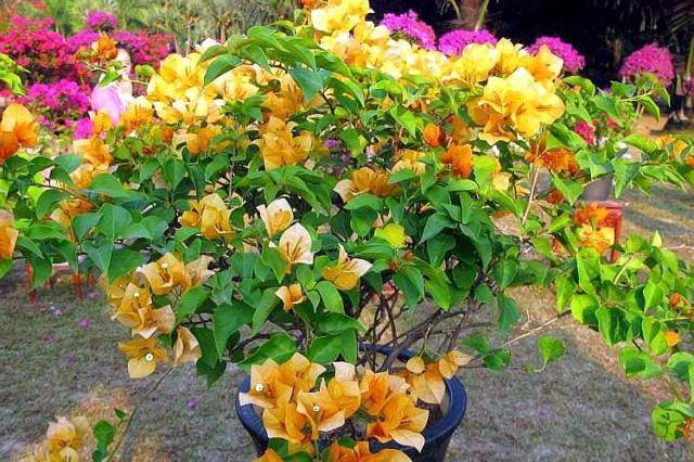 """小露台养上""""1种花"""",全年花朵""""爆不停"""",活像个小花园,真美"""