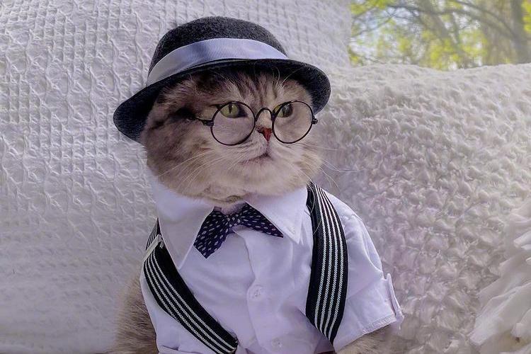 小圆脸benson,一个造型百变的时尚猫