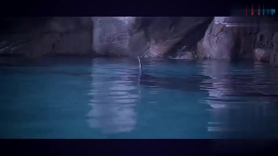 小家伙挺调皮啊,成龙大哥都还以为是鲨鱼呢,精彩