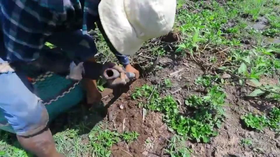 农村小哥湿地挖鱼,一个洞暗藏两条大货,太惊喜了!