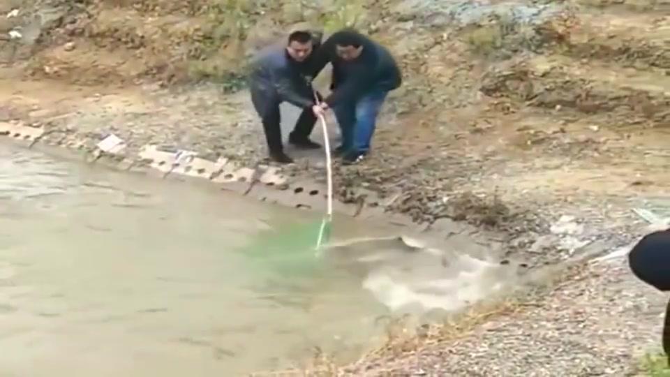 池塘里最大的鱼被钓起来了,老板估计心里不好受,赔本啊