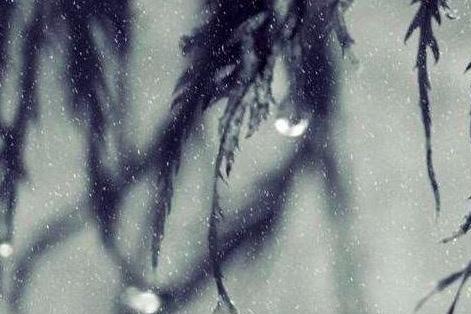 苏轼的这首词只有6句,却有5句写景,美到让人心碎!
