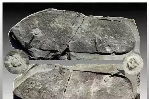 """人类真的是个循环?距今2.7亿的化石,发现了""""史前人类""""的脚印"""