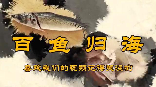 这才是吃石斑鱼的正确方式,比清蒸和刺身还好吃,太香了