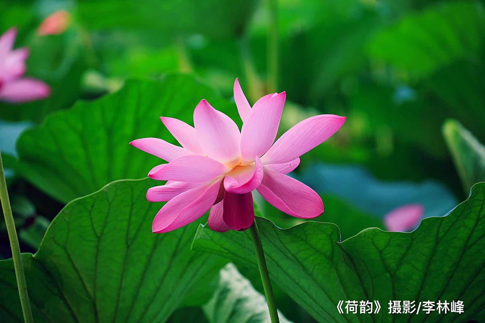 李林峰摄影作品欣赏