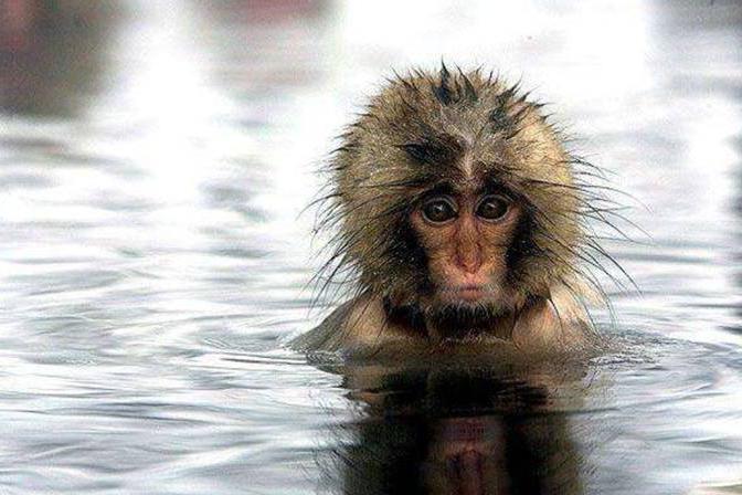 """猿类也曾走出非洲!科学家发现全新物种,名字霸气被称为""""上猿"""""""