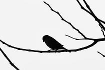 【微距摄影】一只驻足等待的麻雀