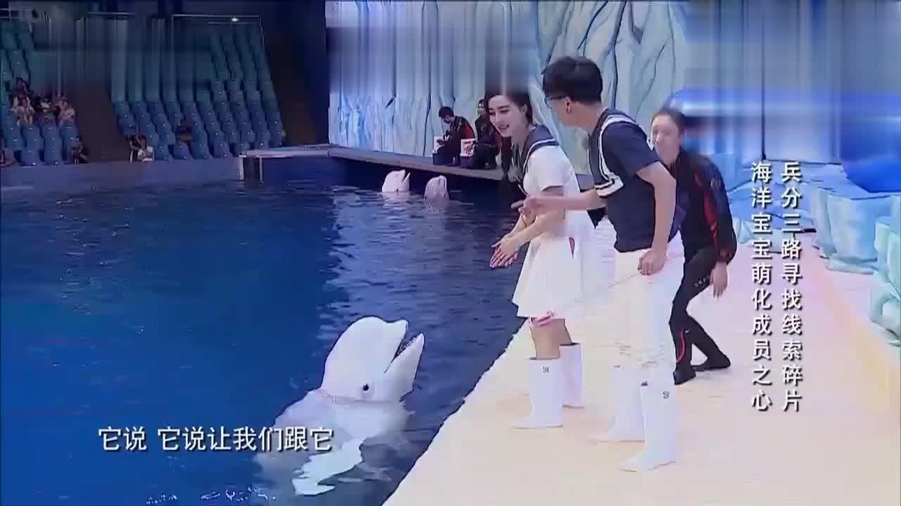 范冰冰与薛之谦与白鲸玩耍!萌化你的内心