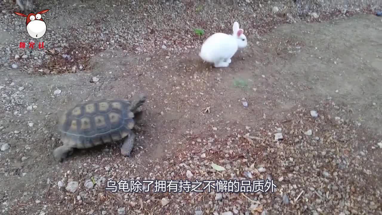 乌龟暴躁殴打大爷,路人不帮忙反而嘲笑,到底是发生了什么?