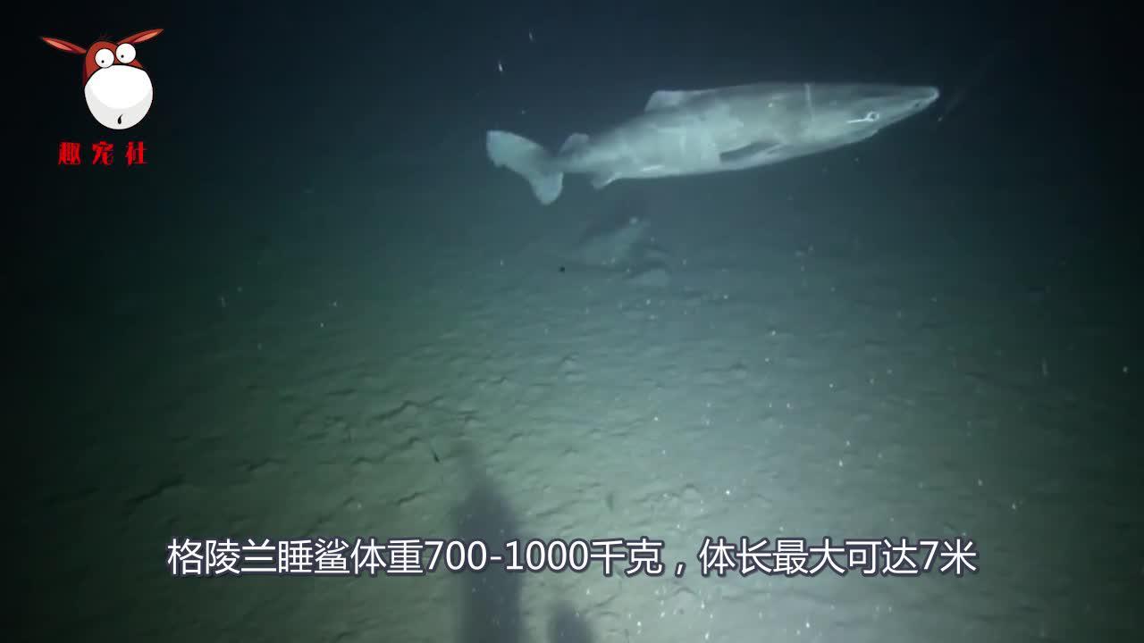 从明朝活到现在?这种动物到底有多长寿,据说超过500岁!