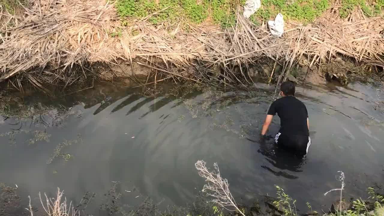 兄弟几去抽水摸鱼,发现一只纯野生甲鱼出现,赶紧下河抓捕