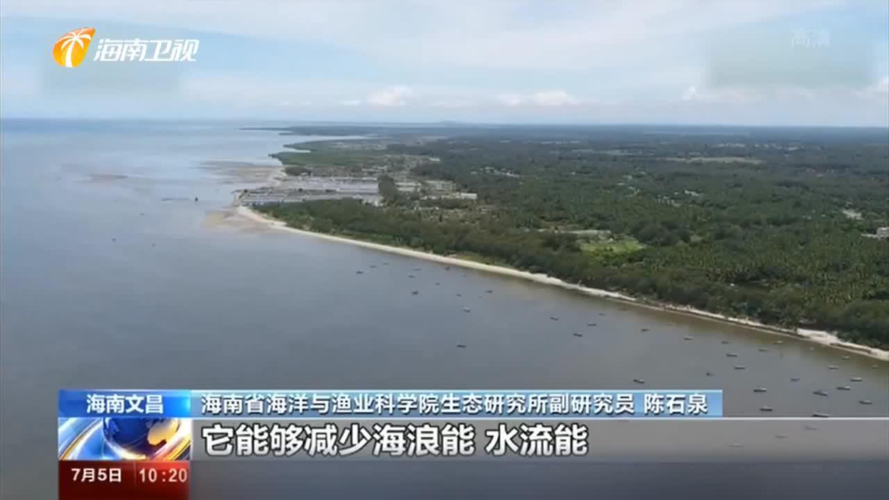 央视持续关注海南生态环境保护:岛礁增绿护蓝 海草床修复现生机