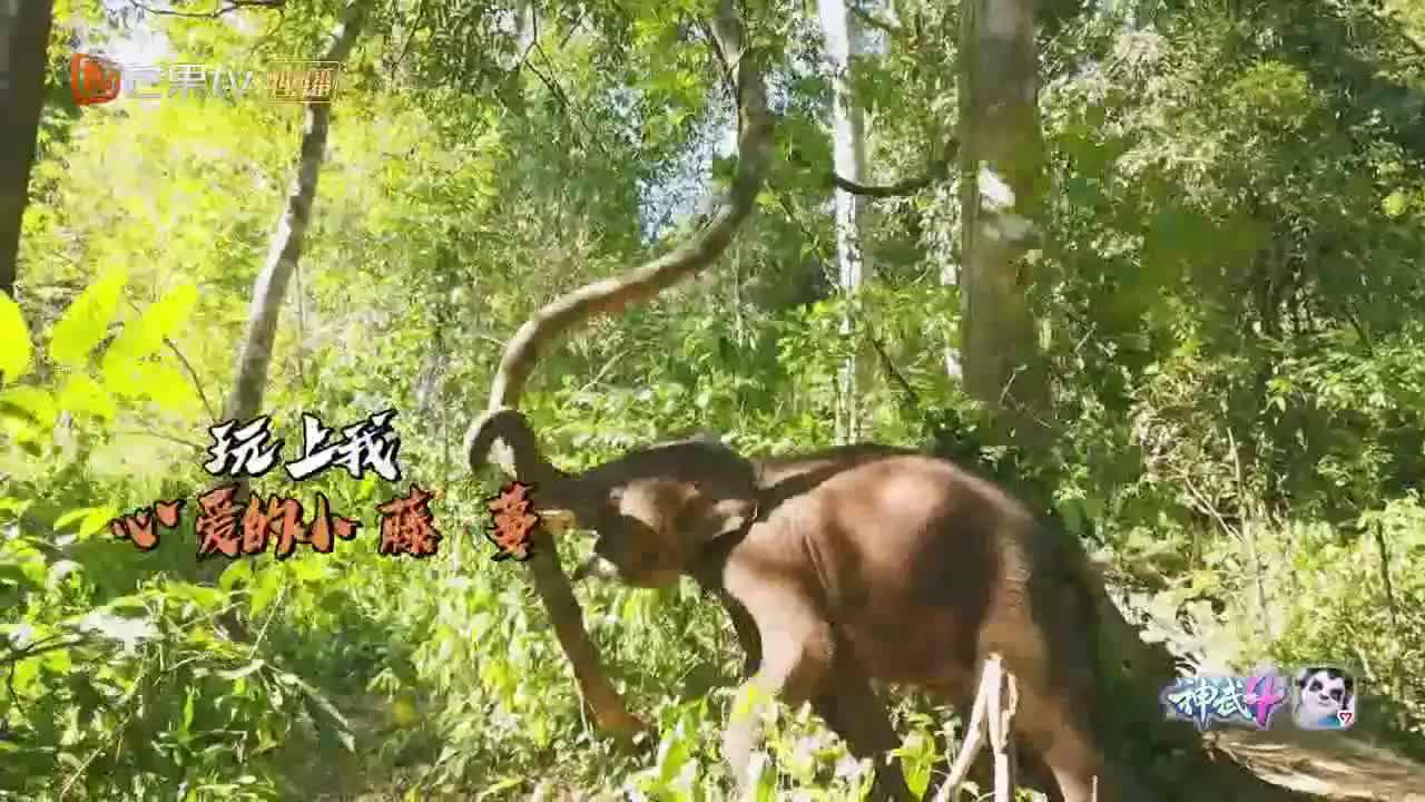 周冬雨朱正廷给大象拍照,大象一叫唤,周冬雨跑得贼快啊!