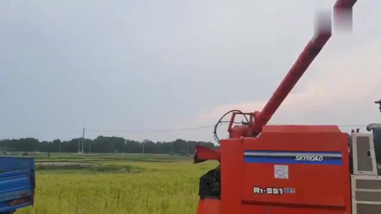 农民机械化收割水稻,不仅效率高还能自动装车,真是先进!