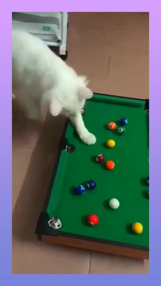 猫咪打桌球,好像很开心的样子!