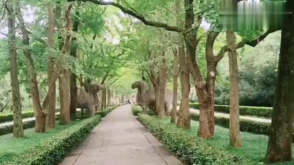 南京钟山风景区,一派人与自然的和谐画面!