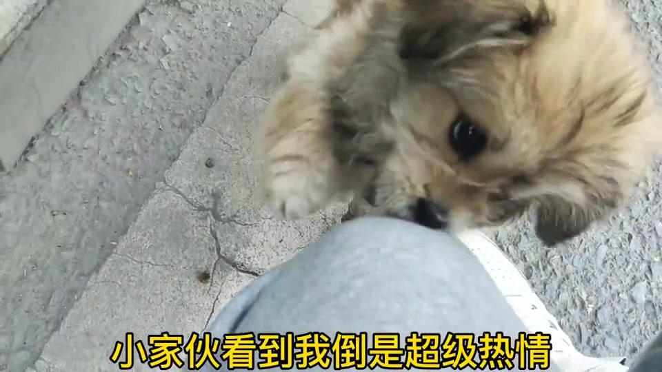 马路上捡回只小流浪狗,满眼泪水让人心疼,只希望你以后都好好的
