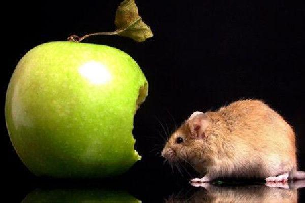 属鼠人各路吉星入命,7月喜神临门,还不快快来接喜
