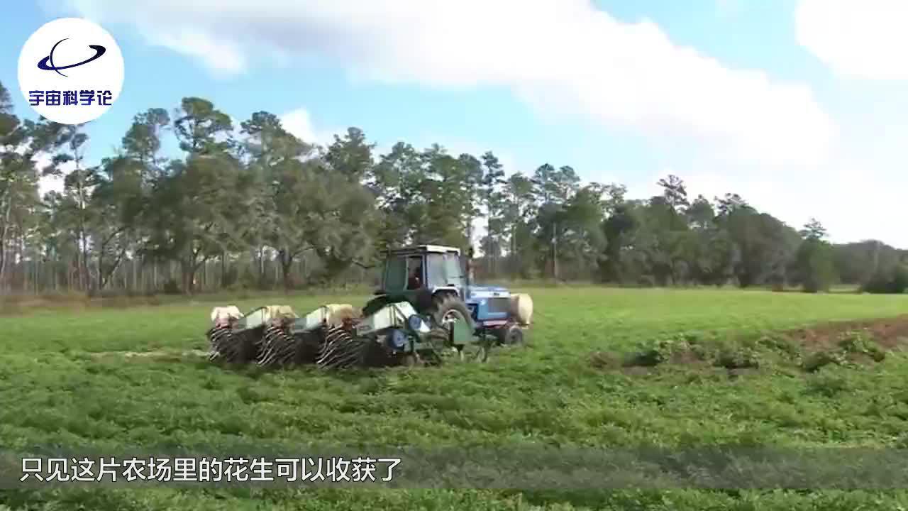 看看老外是怎么收获花生的全程机械化完美配合一小时收获20亩
