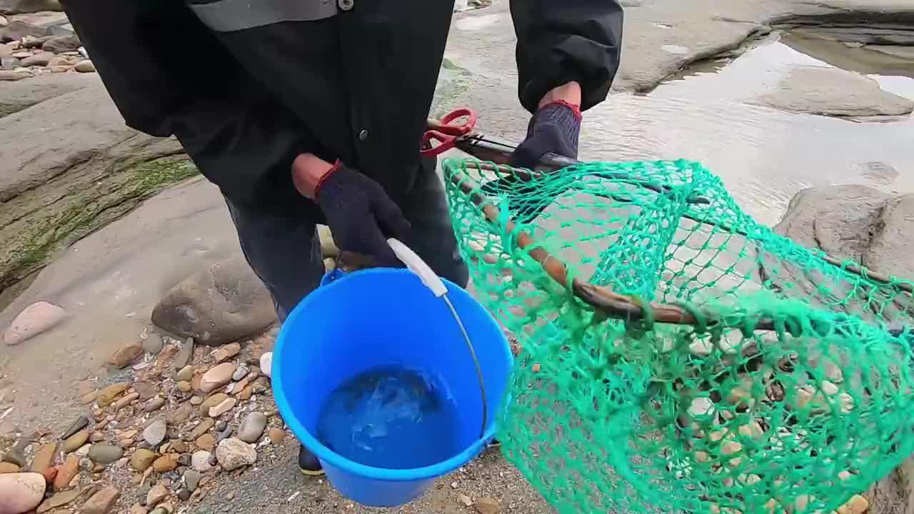 大潮刚退海边水坑全是鱼群,小川拿抄网一网打尽,这样抓鱼好刺激