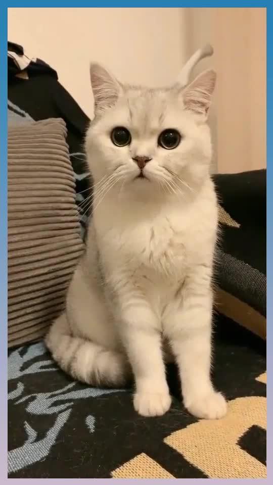 小猫咪真是太可爱了,这么英俊的小家伙哪里来的,快跟我去偷猫